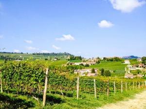 Domaine Oddero - vignes